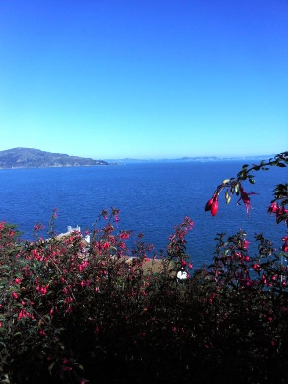 Fuschia, Alcatraz Garden Tour