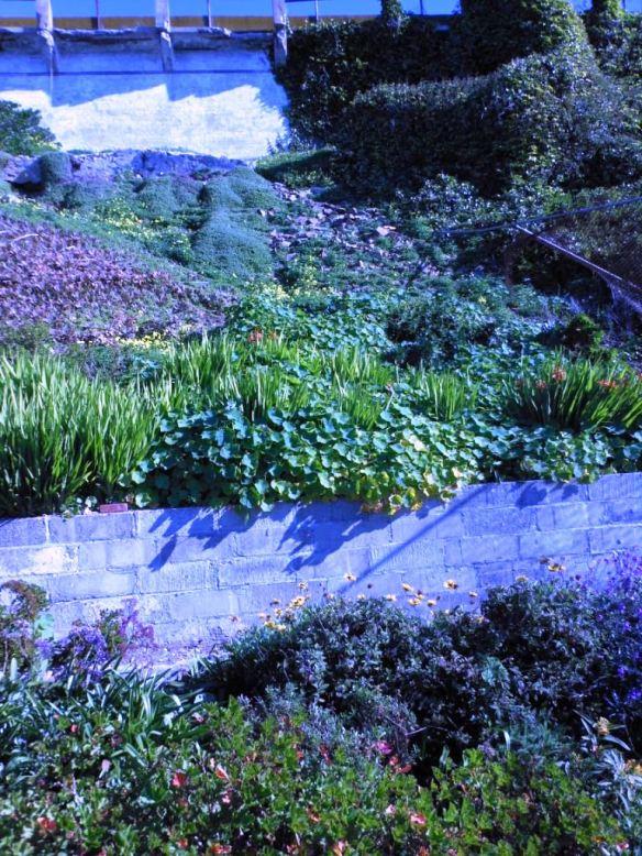 Garden Tour Alcatraz